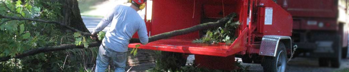 Kingston Tree Services