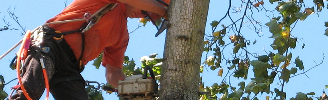 Kingston Tree Service